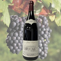 Beaune 2019 - Maison Gérard...